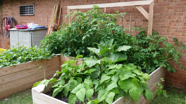 Raised beds with a mix of warm-season fruits and vegetables.