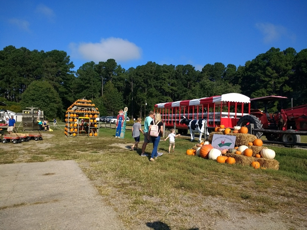 Visitors enjoy the pumpkin season at a farm in North Carolina