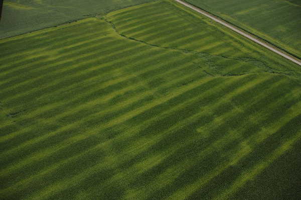 Aerial view of field with yellow and green streaks