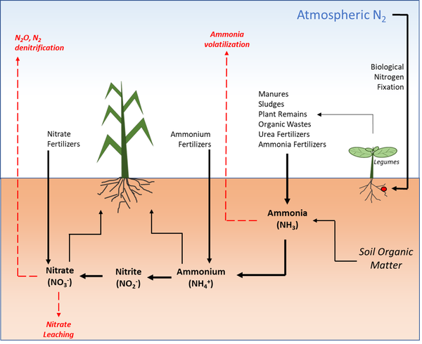 Chart of movement of nitrogen through soil, plants, and air