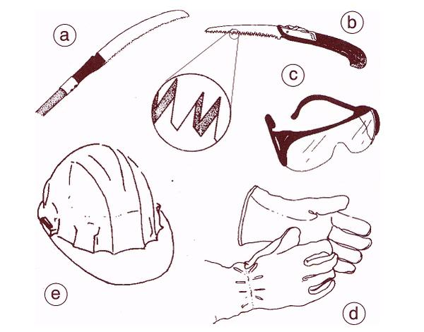 Illustration of pruning tools and safety equipment