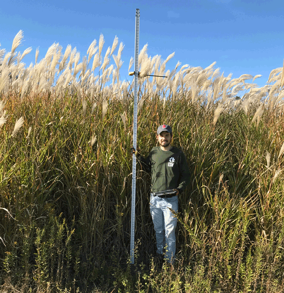 Person in field with miscanthus growing above head height