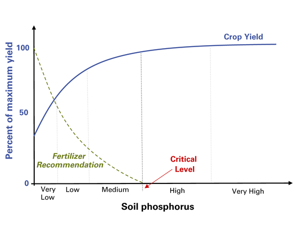 Crop yield increases until soil P reaches the critical level.