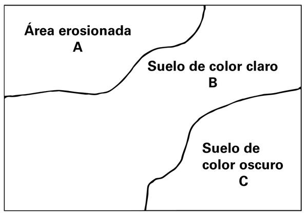 Figura 1. Dentro de cada campo, tome una muestra separada d