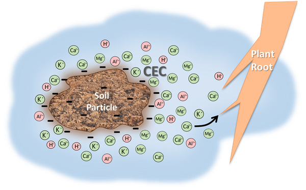 Illustration of negatively charged soil particle and cations