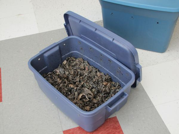 A storage container converted to a vermicompost bin.