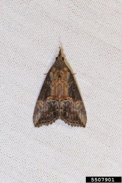 Moth resting on cloth