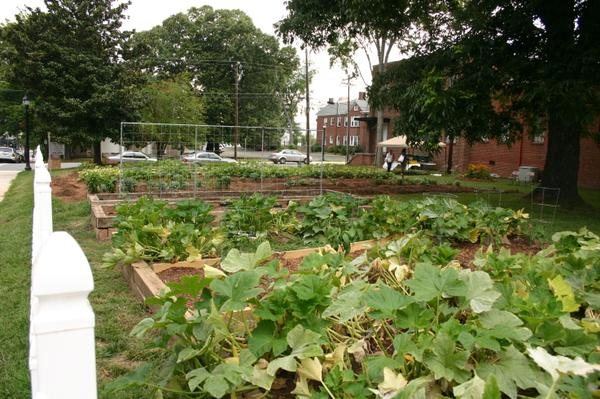 Photo of Beloved Community Garden in Greensboro