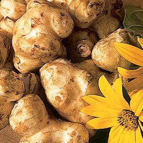 Jerusalem artichoke tubers and flower