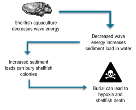 Illustration of aquaculture interaction with sediment