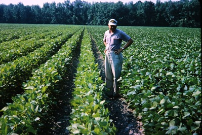 Man standing in field with rows of bushy soybeans