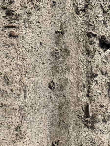 Soil crusting minimzing soybean emergence