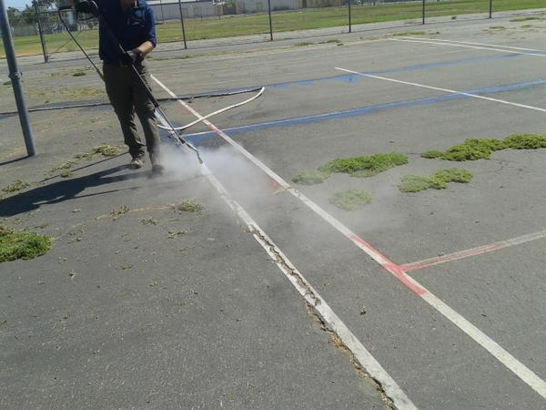 Steam is directed to the weeds growing in the cracks of pavement