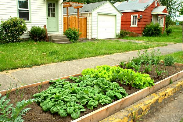 Photo of raised beds in a neighborhood.