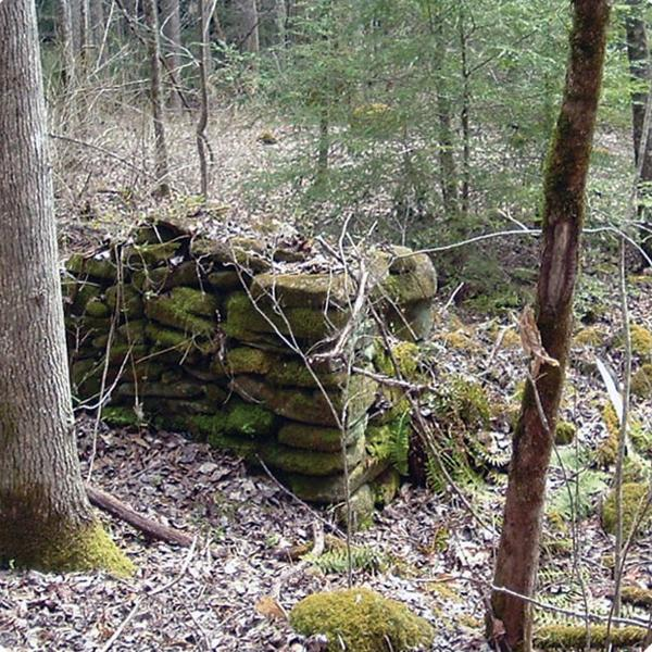 Stacked stones covered in moss and surrounded by trees in a wood