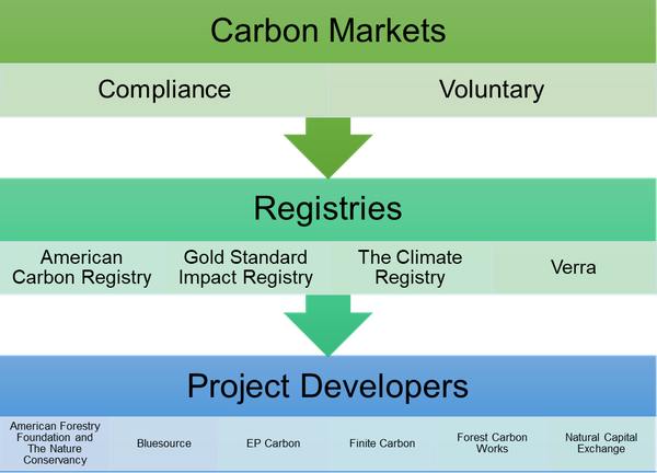 graphic of common agents involved in forest carbon markets