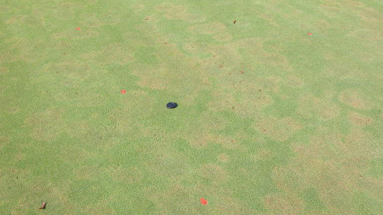 Pythium root dysfunction stand symptoms.