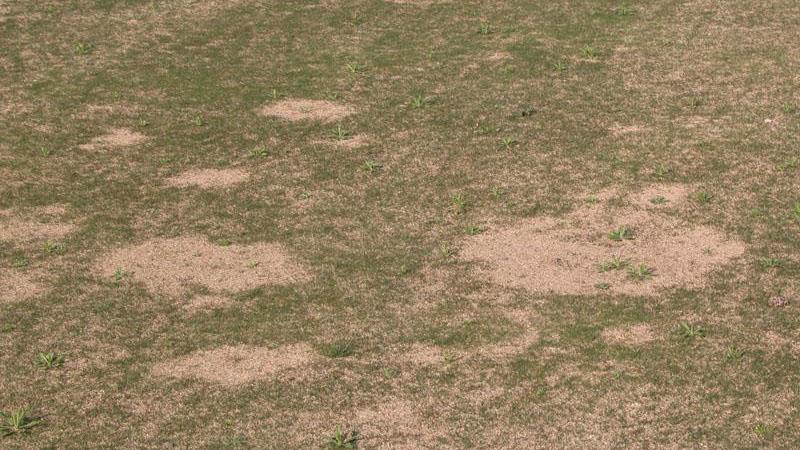 Spring dead spot stand symptoms.