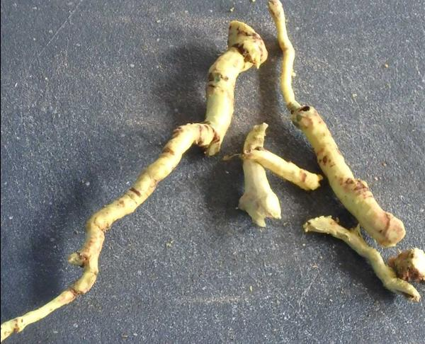 Figure 3. Clean roots.
