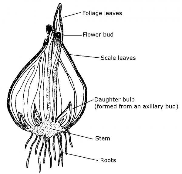 flower diagram with labeled parts