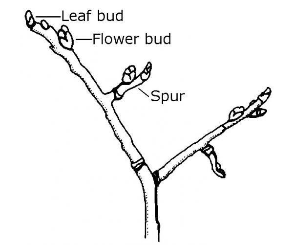3 Botany