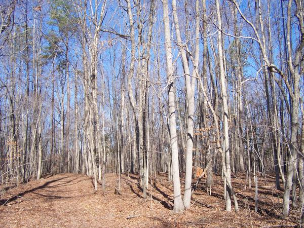 Forest Land Enhancement Practices in North Carolina | NC