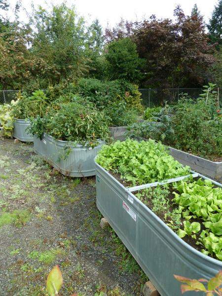 Here Vegetables Are Grown In Old Water Troughs. Make Sure That Any  Containers Used Have Good Drainage. Container Garden