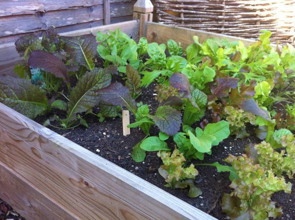 Figure 16–2 Gardens can be any size This patio garden provides enough produce for the owner to have a salad every day