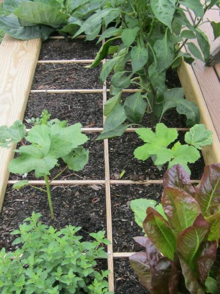 16  Vegetable Gardening | NC State Extension Publications