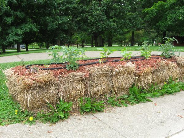 raised bed straw bales
