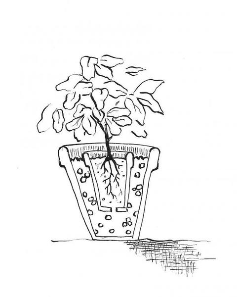 double potted plant