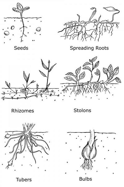 ways weed spread
