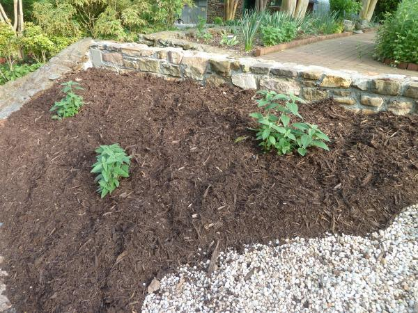 Mulching With A 1 3 Inch Layer Of Organic Material Will Help To Build Good Air And Water Relationships In The Soil As Well Add Nutrients For Uptake By