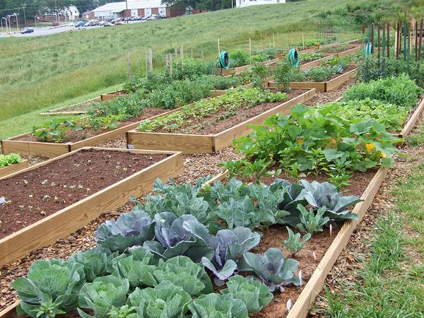 Raised beds with water hoses.