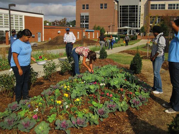 Gardeners work in a community garden.