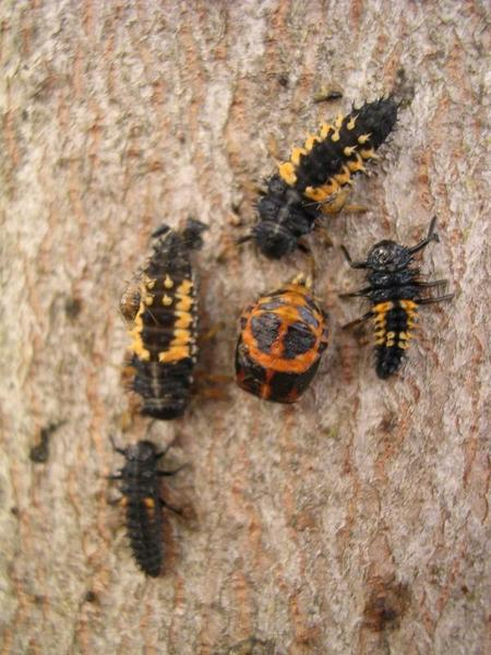 4  Insects | NC State Extension Publications