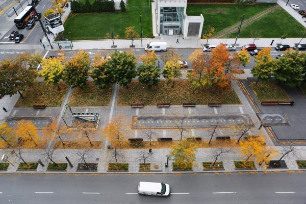 Parking Lot Planting