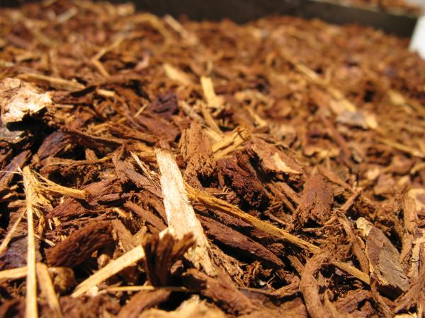 A photo of wood chip mulch.