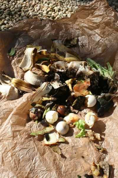 kitchen scraps ready for compost