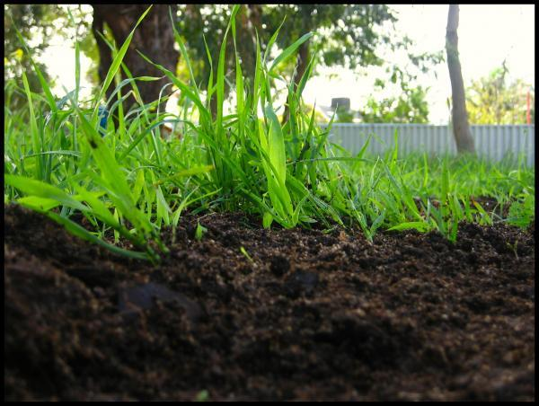 top dressing vermicompost