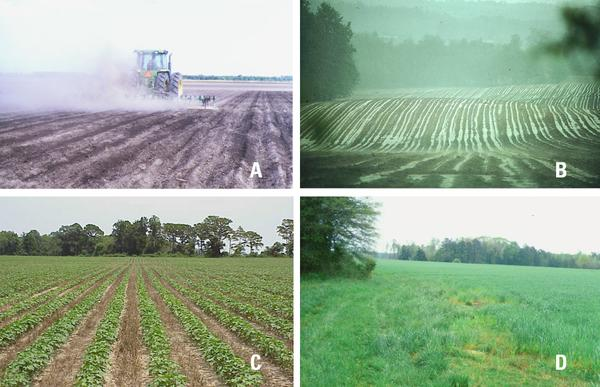 Winter annual cover crops nc state extension publications erosion caused by wind and water are much greater on bare ground sciox Gallery
