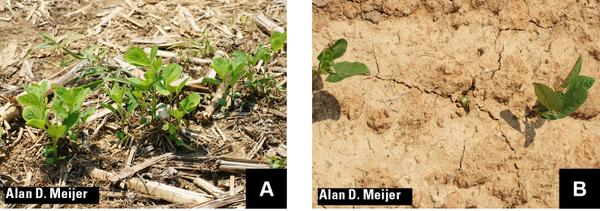 No-till (A) and moldboard plow (B) treatments showing the dramat