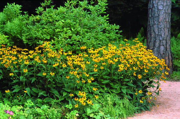 Landscaping for Wildlife with Native Plants | NC State Extension ...