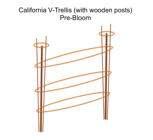 Figure 17a. California V-trellis (with wooden posts) pre-bloom.