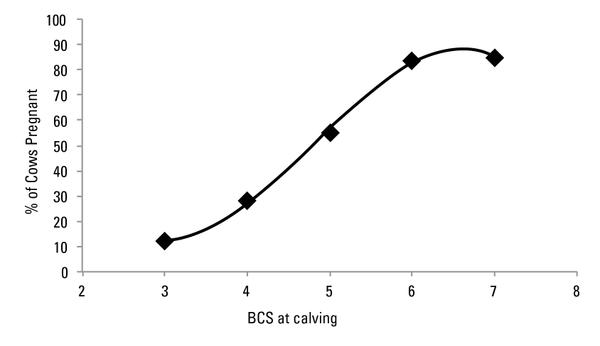 Figure 1. Pregnancy rates of cows calving