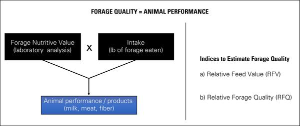 Graphic showing factors that affect animal performance and indic