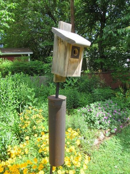 Photo of a bluebird box with predator guard