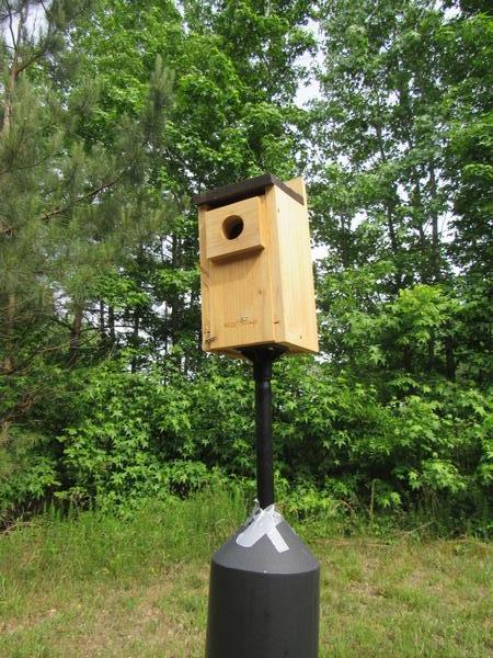 Photo of blue bird box on field / forest edge
