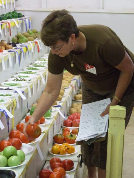 A master gardener judges vegetables at the Burke County Fair