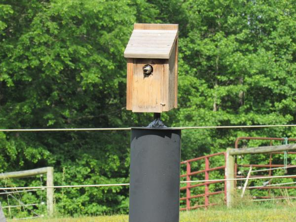 photo of chickadee in a birdbox
